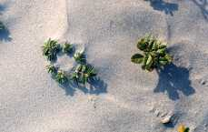 beach plant closeup